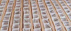 Die Archivierung im Bunker des Instituts für Pathologie der CAU zu Kiel (UK SH).
